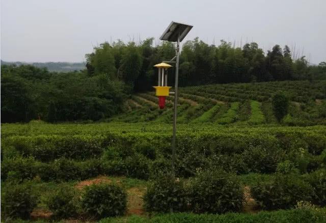<b>太阳能杀虫灯让茶园病虫防治做到零污染</b>