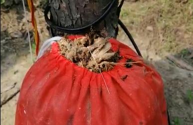 6天的杀虫效果, 这一大袋子的害虫把客户都惊呆